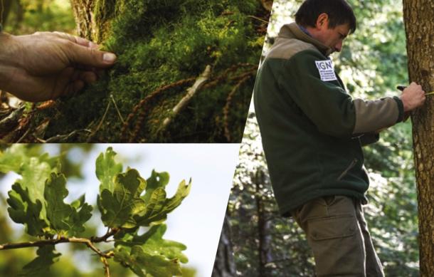 Inventaire forestier 2019 : nos ressources augmentent