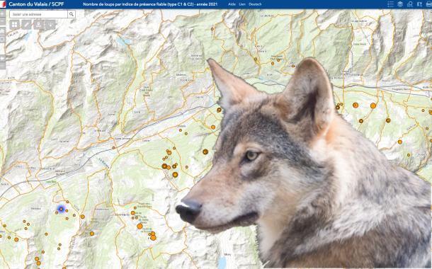 Loup, y-es-tu ? Des troupeaux en sécurité grâce aux SIG