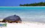 Te Mana o te Moana : quand le SIG veille sur les tortues vertes de Polynésie