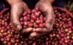 Les technologies SIG fondamentales pour le développement durable de Nespresso
