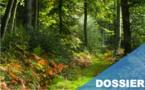 Forêts : l'appel 2.0 du SIG